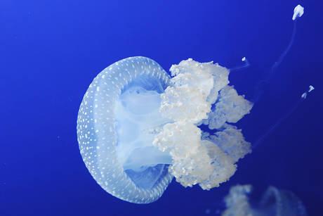 Il fascino delle meduse in mostra – FOTO