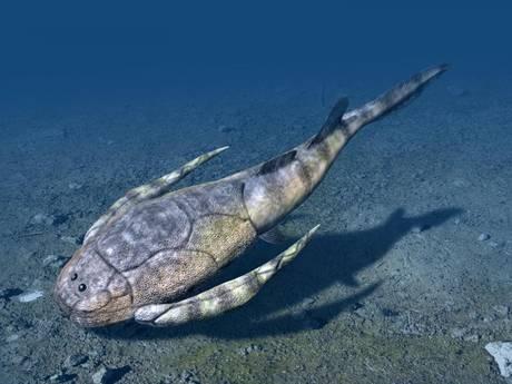 La culla dei vertebrati nelle lagune poco profonde