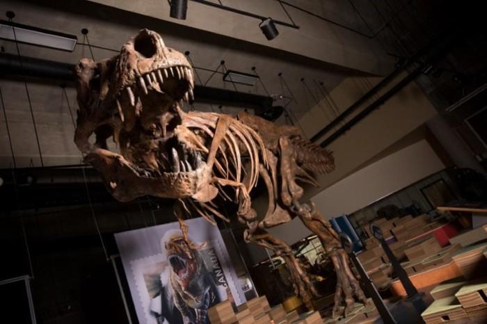 In Canada il più grande T-rex mai scoperto