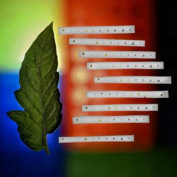 Lo smartphone può 'annusare' le malattie delle piante