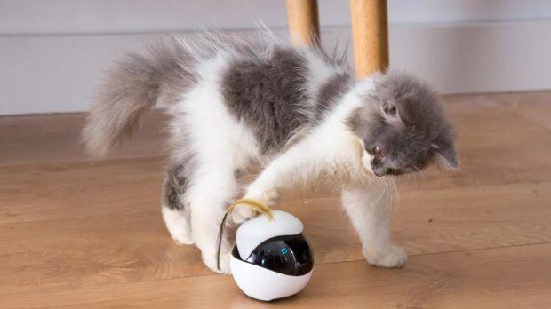 ebo robot gatti