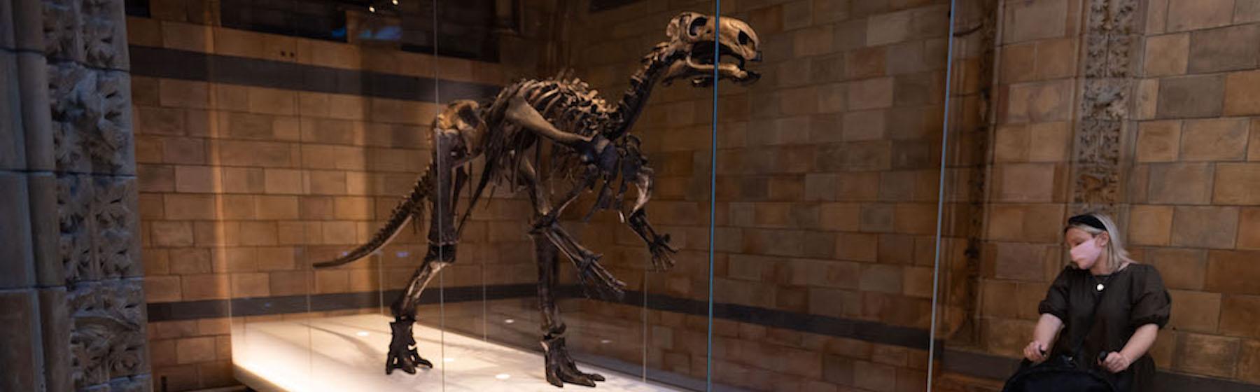 Il Museo di storia naturale di Londra ha riaperto