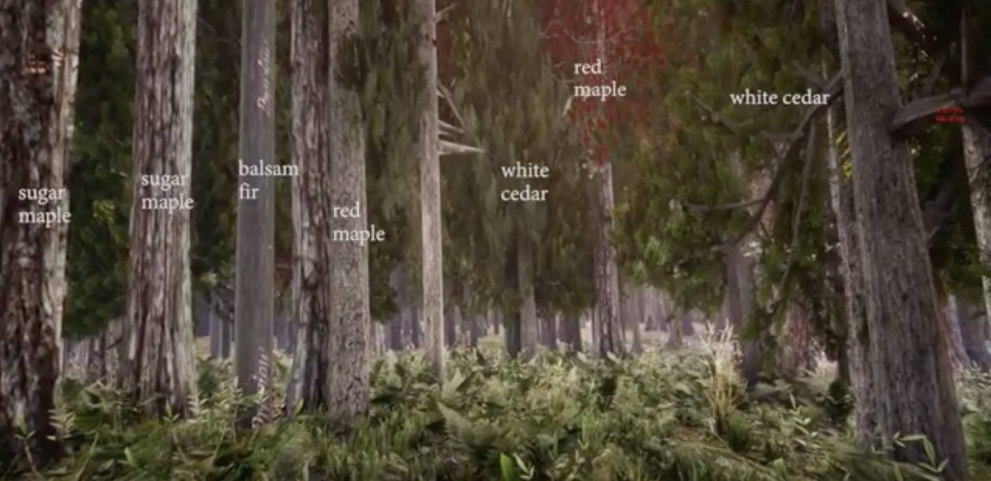 I ricercatori che rendono il passeggiare nei boschi un'esperienza virtuale